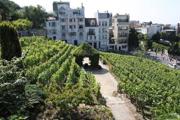 Vignes de Montmartre