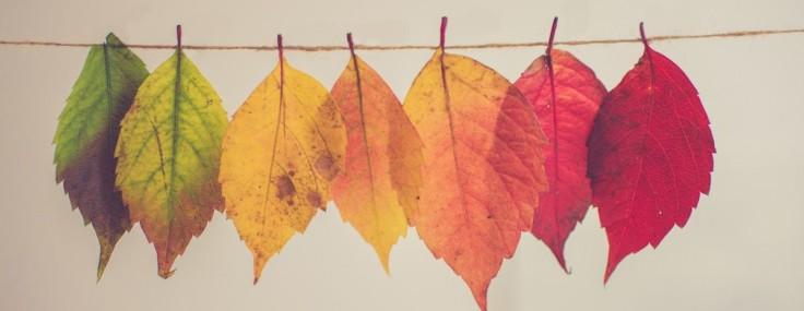 Atelier « Je dessine avec des feuilles de vigne »