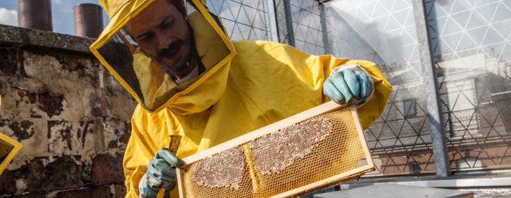 Atelier Les ruches d'ICI